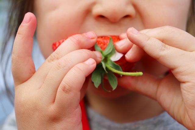 苺を食べる子供のアップの写真