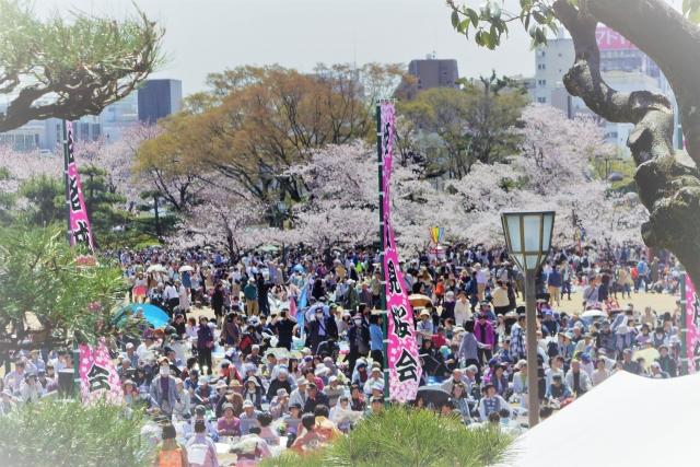 姫路城桜まつりの写真
