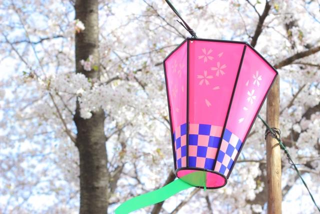 幸手権現堂桜堤の桜と提灯の写真