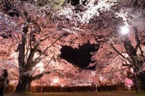 弘前市の桜の写真