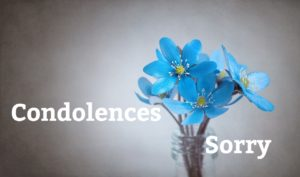 青いお花の画像