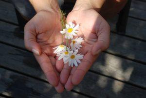 手のひらにのった花の写真
