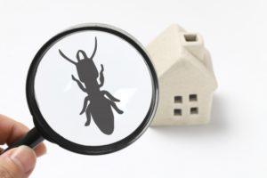 虫眼鏡で蟻を見ているイラスト