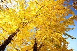 紅葉している木の写真