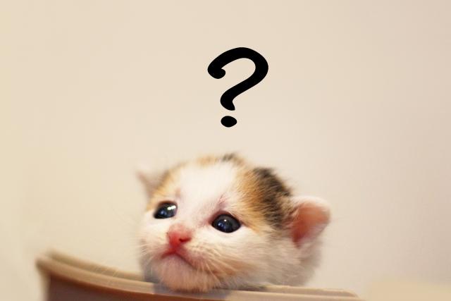 ?を浮かべる子猫