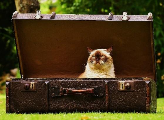 トランクに入った猫